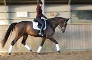Hest til salg - ROSIANA-DEA