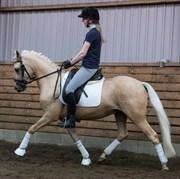 Hest til salg - ZOPHUS PORSBORG