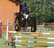 Hest til salg - ENRIQE DE REVE