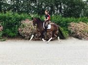 Hest til salg - JEPHA'S LOORELAI