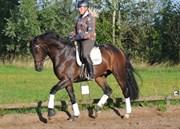 Hest til salg - SOMMERLUND'S DEVITO