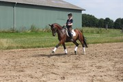 Hest til salg - WEBBER