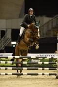 Hest til salg - HAISE