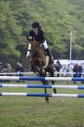 Hest til salg - TAI TIMA