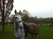 Hest til salg - CANCHELLO