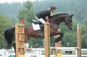 Hest til salg - UTOPIA LOVE
