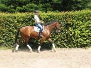 Hest til salg - DION
