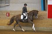 Hest til salg - samba