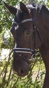 Hest til salg - TRELDEGÅRDS ACACIA