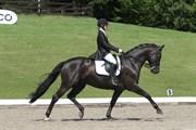 Hest til salg - Fleedwood