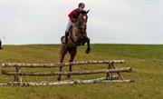 Hest til salg - A-DAY