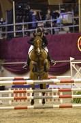 Hest til salg - ZIPPO