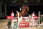 Hest til salg - LEXINGTON