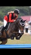 Hest til salg - SKY JUMPER