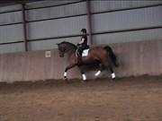 Hest til salg - Højvangs Cora