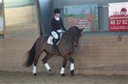 Hest til salg - Lucky Starlight