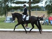 Hest til salg - PENNY LANE