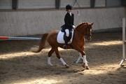 Hest til salg - Ariel