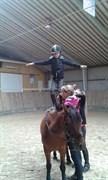 Hest til salg - MATIS
