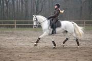 Hest til salg - POWERGIRL