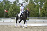 Hest til salg - HJORT'S SIGNARIE