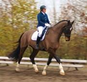 Hest til salg - LAURBERGGAARD'S LUDWIG