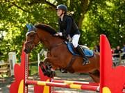 Hest til salg - HEIHOEVE´S MAX