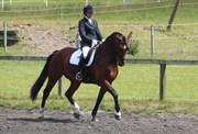 Hest til salg - Bailey