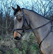 Hest til salg - UN