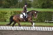 Hest til salg - QUITE LIKE
