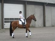 Hest til salg - ALLTIME MADONNA