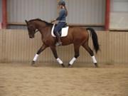 Hest til salg - LOPES
