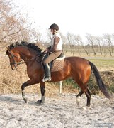 Hest til salg - WIE WELT