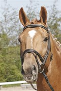 Hest til salg - BELLONARD