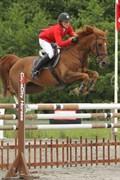 Hest til salg - SPEEDY SPARROW