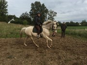 Hest til salg - LITTLE GHOST Z (MR. Z)