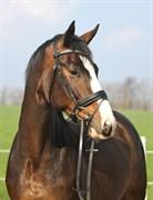 Hest til salg - LIMITED EDITION