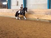 Hest til salg - SUNNY GIRL