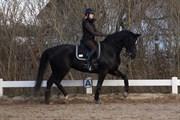 Hest til salg - HAVANNA FRESCO
