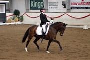 Hest til salg - HIGH FIDELITY