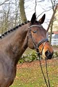 Hest til salg - SØNDERGAARDS EASY HOUR