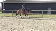 Hest til salg - BOUNTY