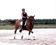 Hest til salg - JUPITER STAUSLYKKE