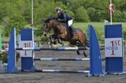 Hest til salg - GANNONS LASS