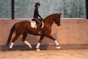 Hest til salg - SElfie