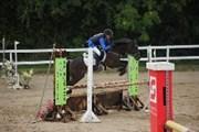 Hest til salg - Låddenhøjs Bonzai