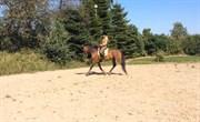 Hest til salg - SANTANA