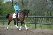 Hest til salg - Carolus
