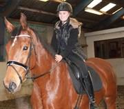 Hest til salg - BASTIAN - LIGHT
