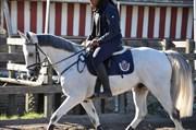 Hest til salg - IRISH SUPREME